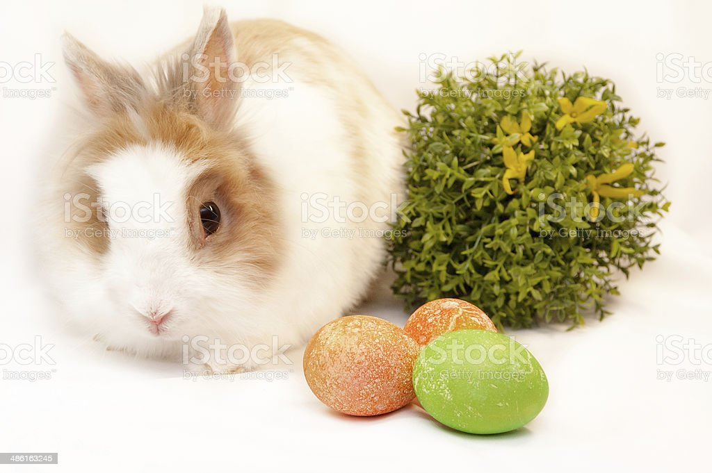 bunny and easter eggs on white background stock photo