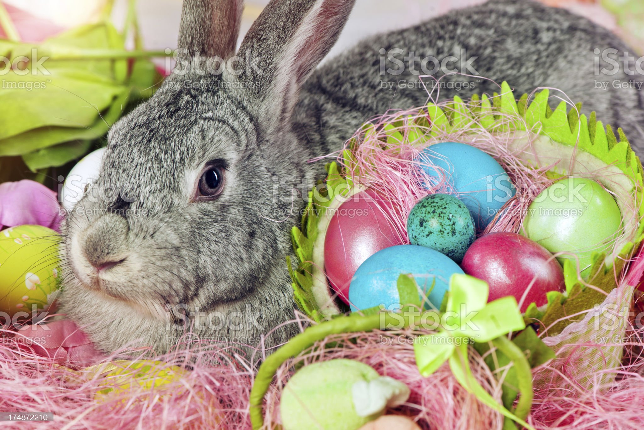 Bunny and Easter eggs royalty-free stock photo