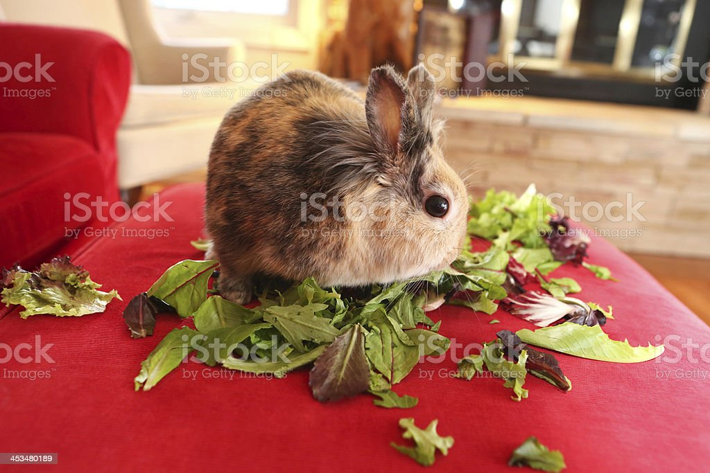 bunny and lunch royalty-free stock photo