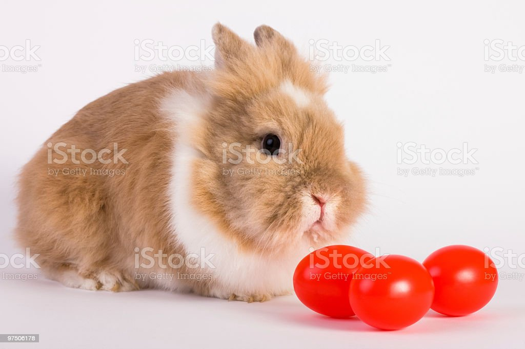 Bunny and traditional Easter eggs stock photo