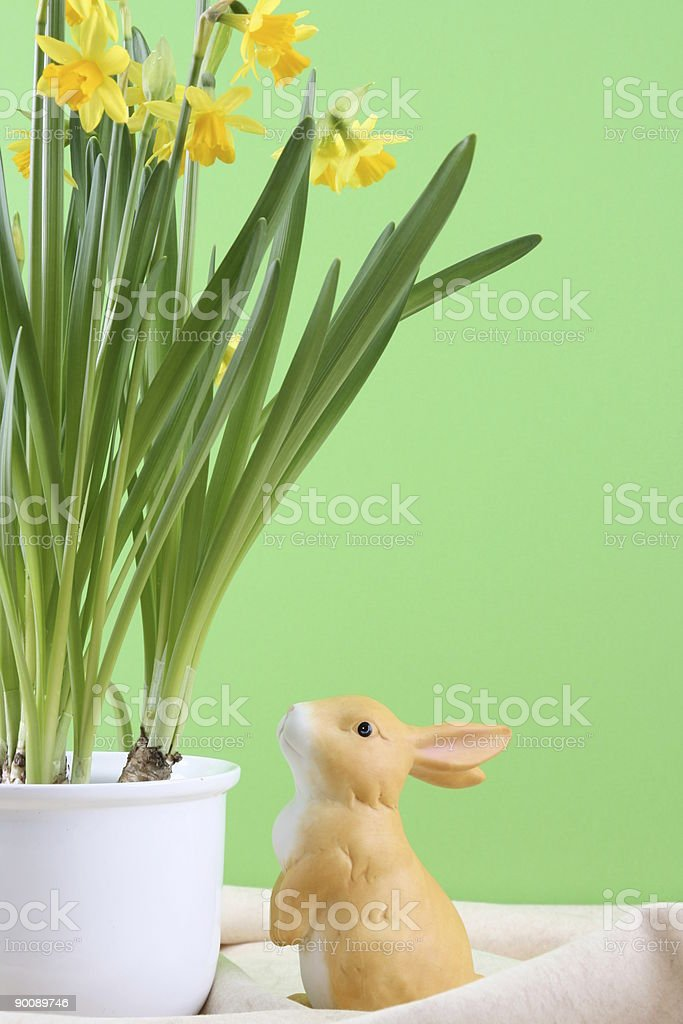 Bunny at Narcisse Flower royalty-free stock photo
