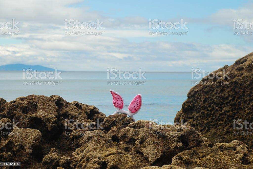 Bunny at the Coast stock photo