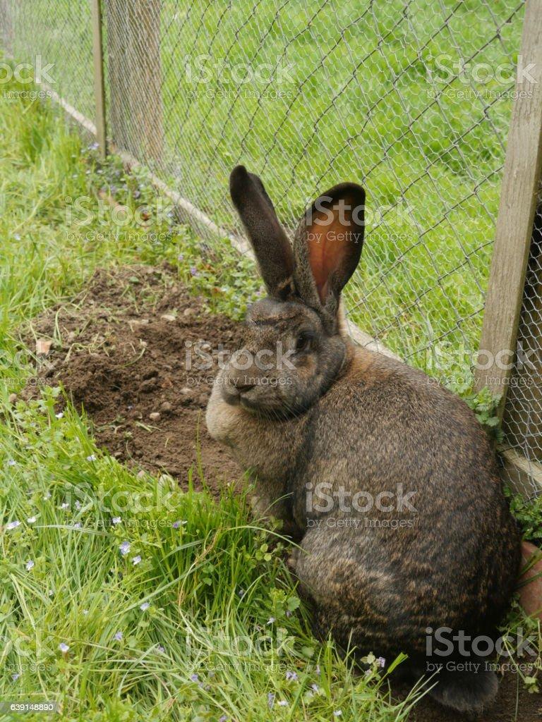 bunny ears listening stock photo