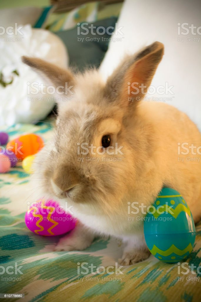 Bunny in Basket for Easter stock photo