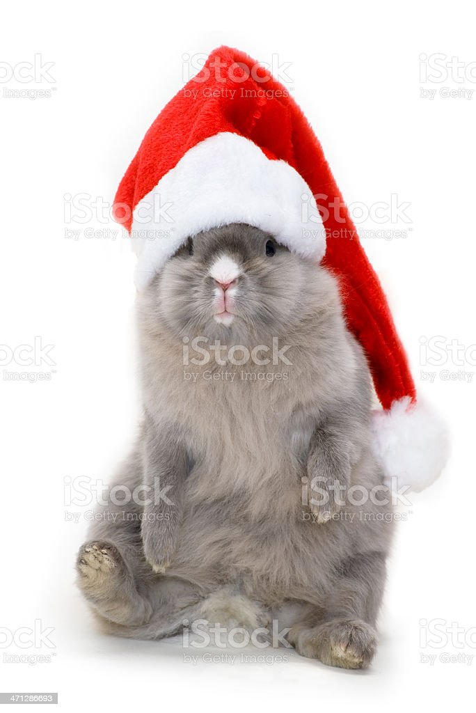 Bunny in the red 'santa claus' hat royalty-free stock photo