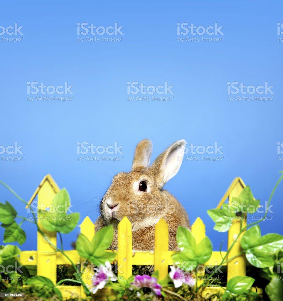 Bunny royalty-free stock photo