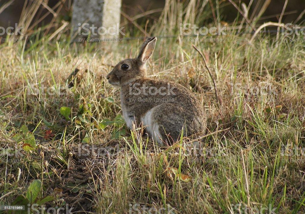 Bunny stock photo