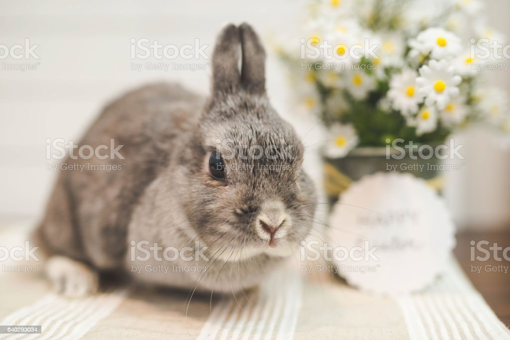 Bunny rabbit on Easter table stock photo