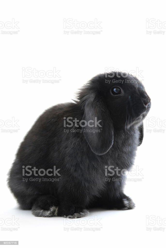 Bunny rabbit stock photo