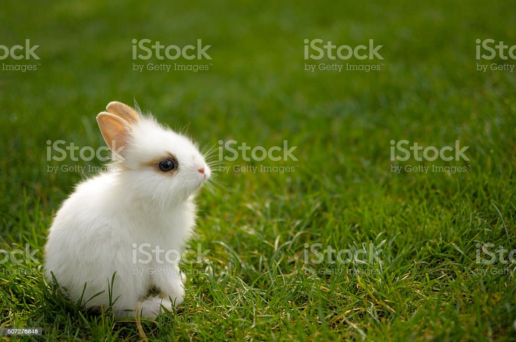 Bunny sitting in the grass stock photo