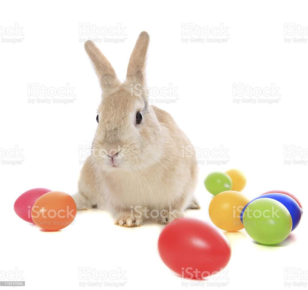 Bunny sitting in the middle of several colorful Easter eggs royalty-free stock photo