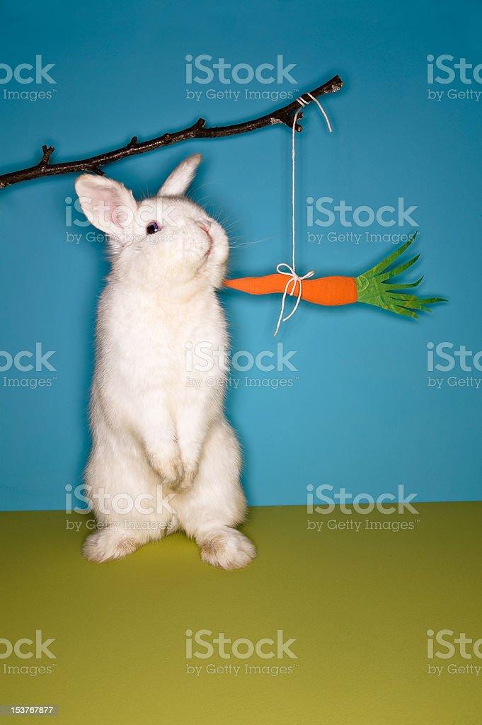 Bunny de pé para comer um petisco. foto royalty-free