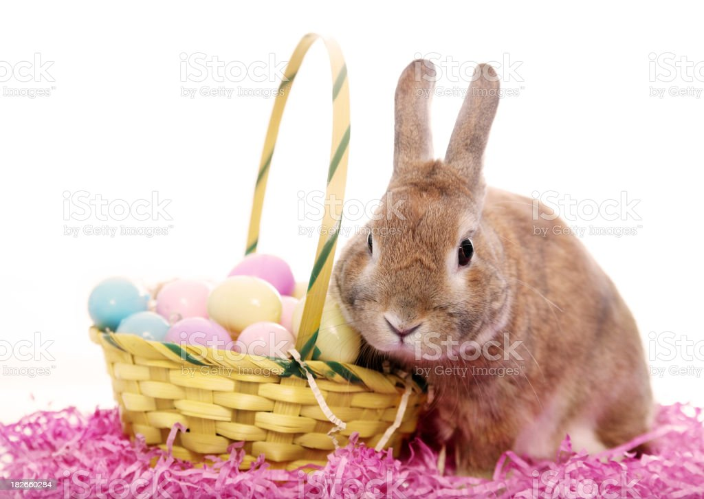 Bunny with an Easter basket stock photo