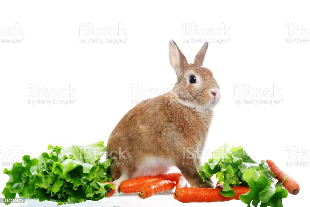 Bunny with vegetable stock photo