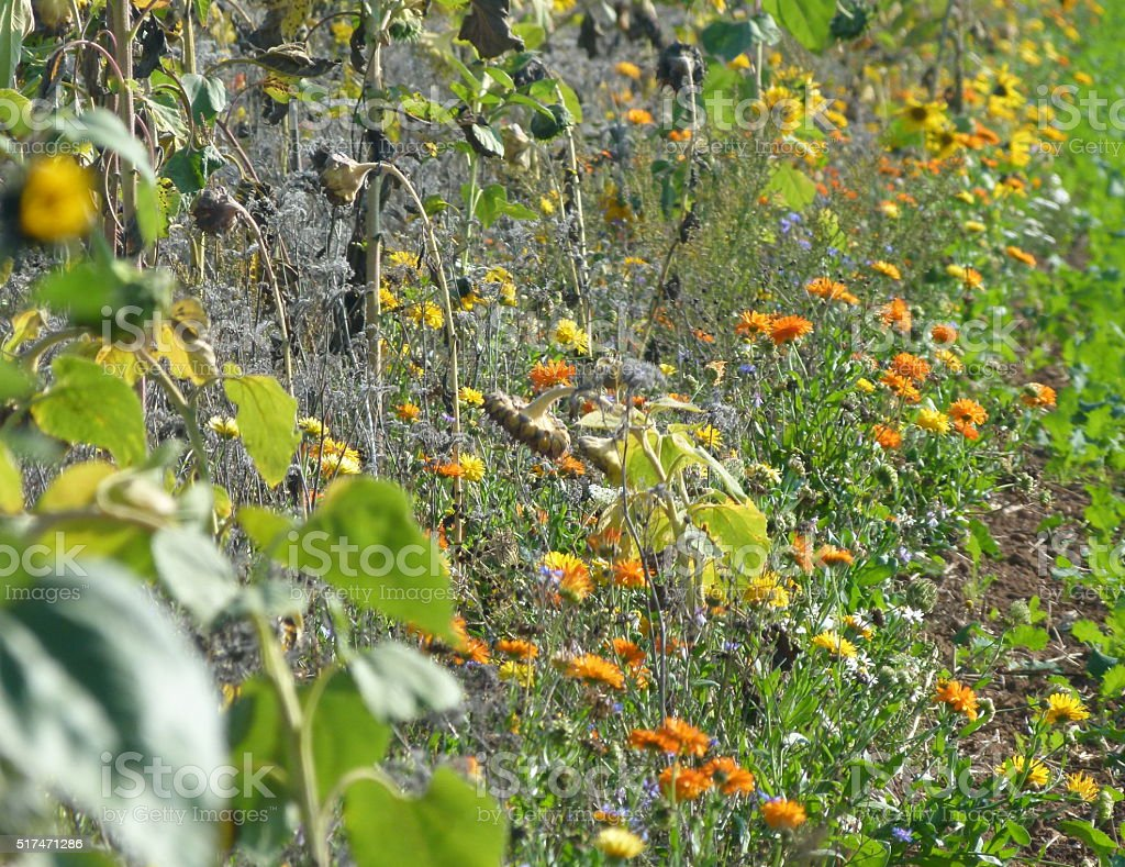 bunte Blumen am Feldrand stock photo