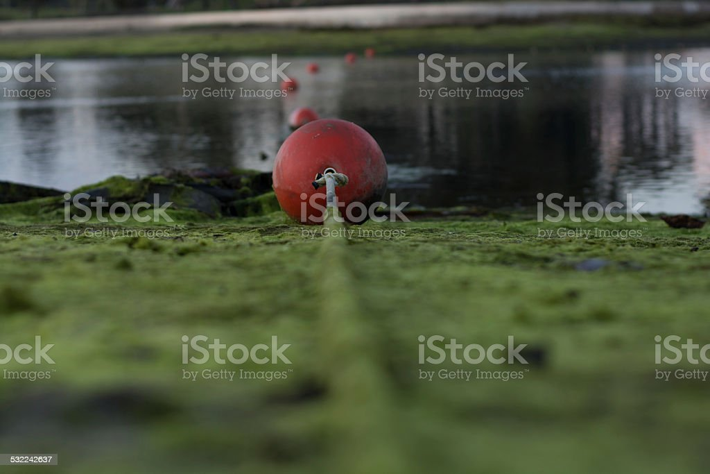 Buoys in water stock photo