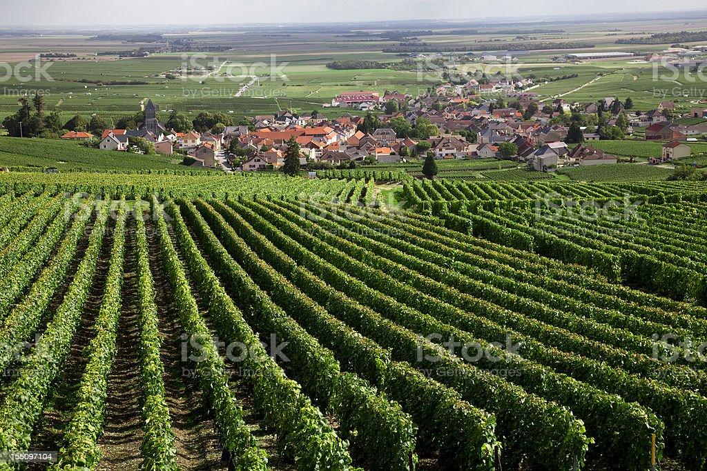 Burgundy region stock photo