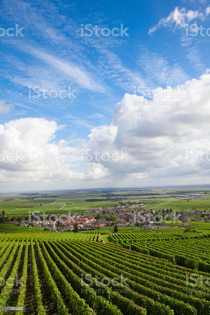 Burgundy region vineyard in France stock photo