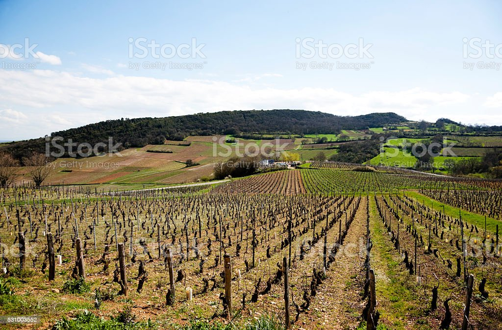 Burgundy Vineyards stock photo