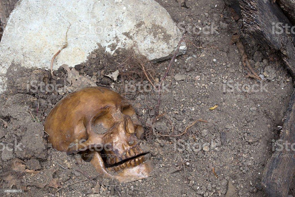 Buried Human Skull stock photo