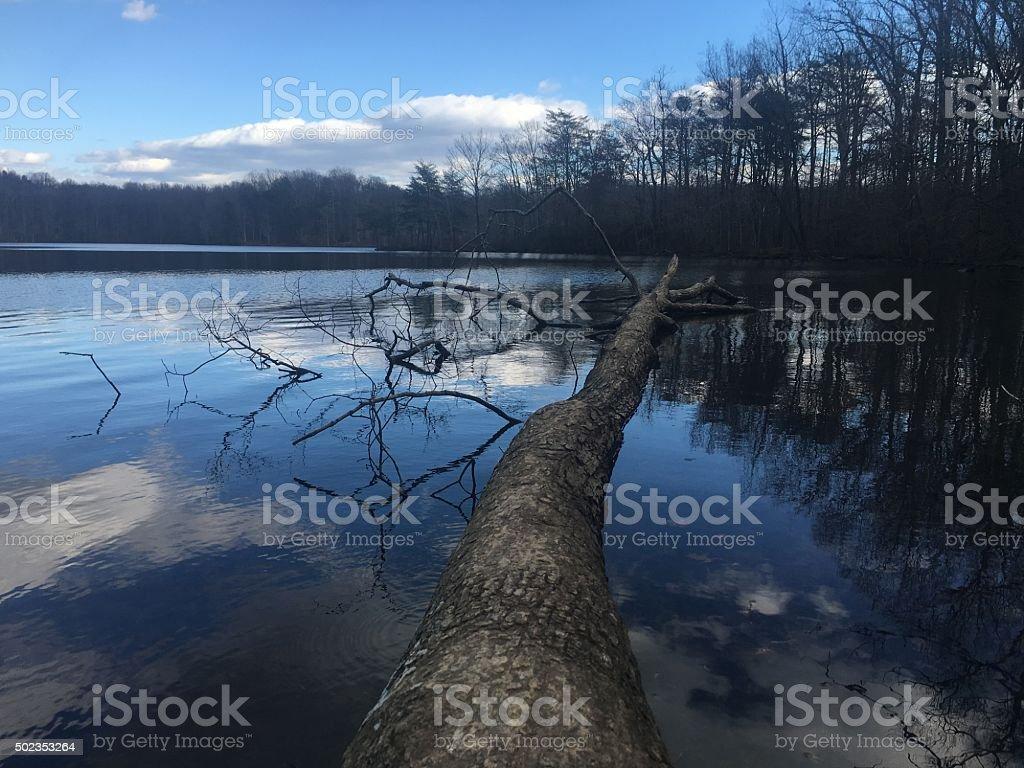 Burke Lake stock photo