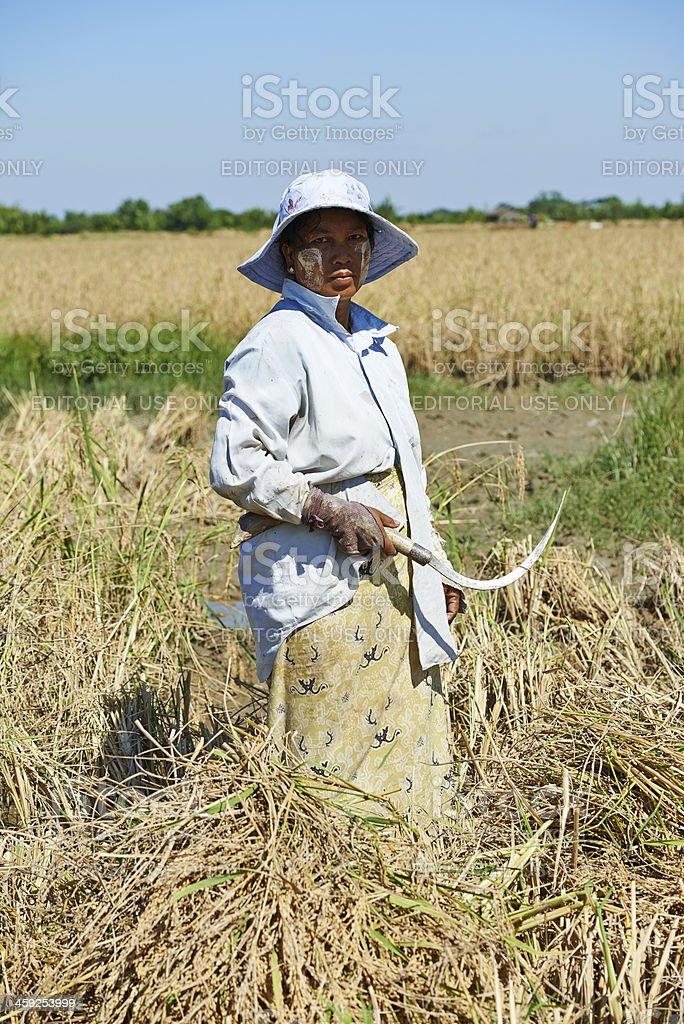 Burmese Farmer royalty-free stock photo
