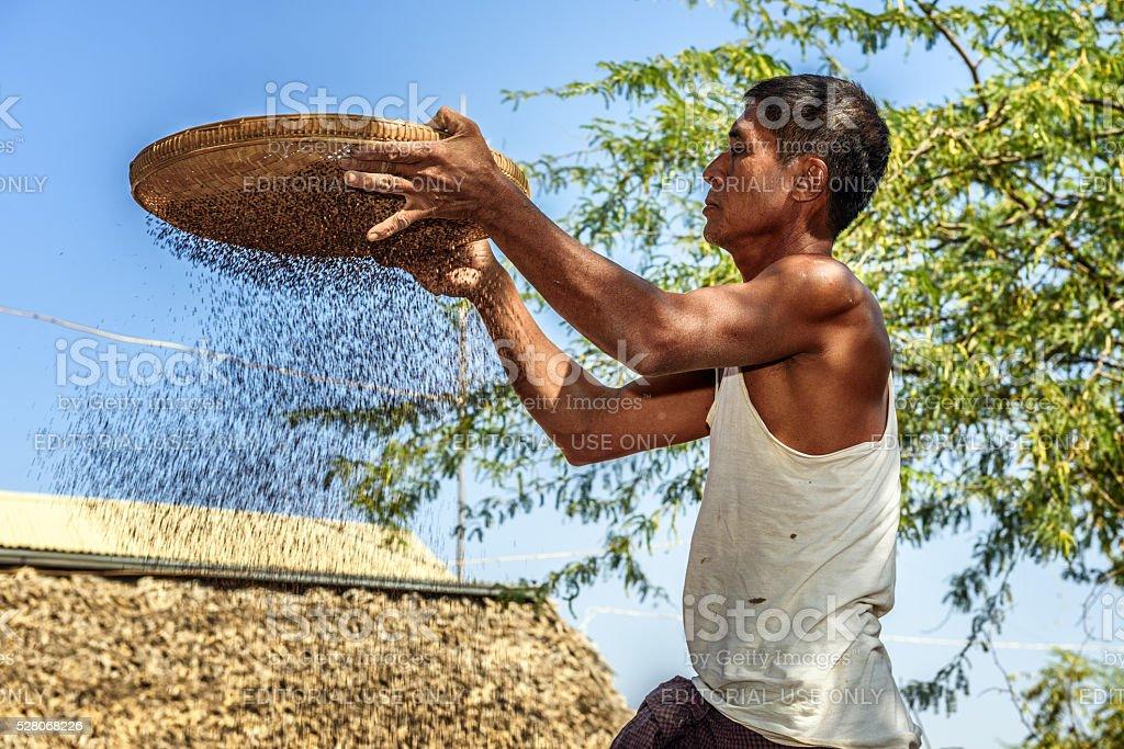 Burmese farmer sifts grains stock photo
