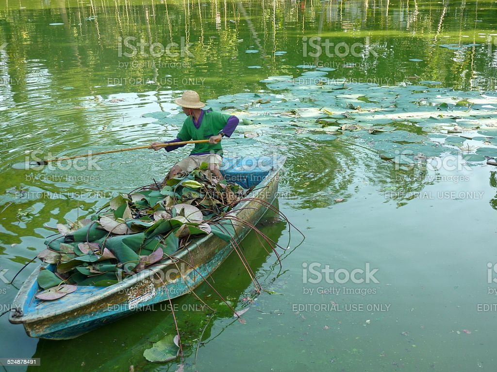 Burmese man cleaning Kandawgyi Lake, Yangon stock photo