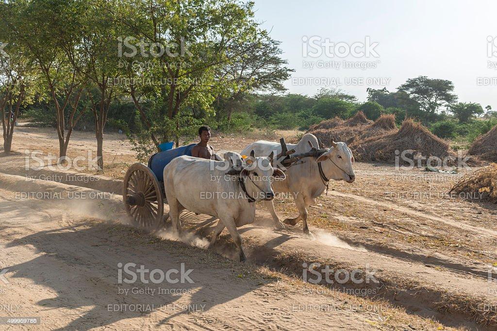 Burmese man on oxcart transporting water, Bagan, Myanmar stock photo