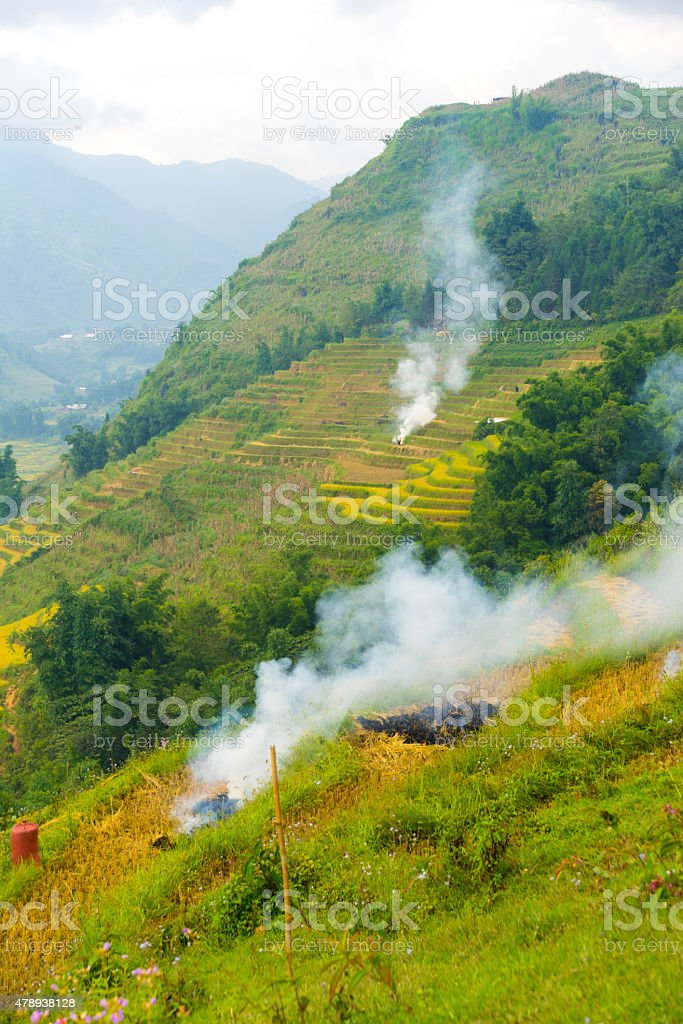 Burn the crops before take a new planted stock photo