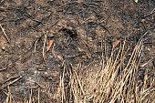 burned earth