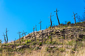 Burned forest full of crosses made with branches