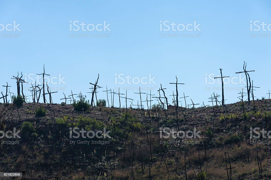Burned forest full of crosses made with branches stock photo