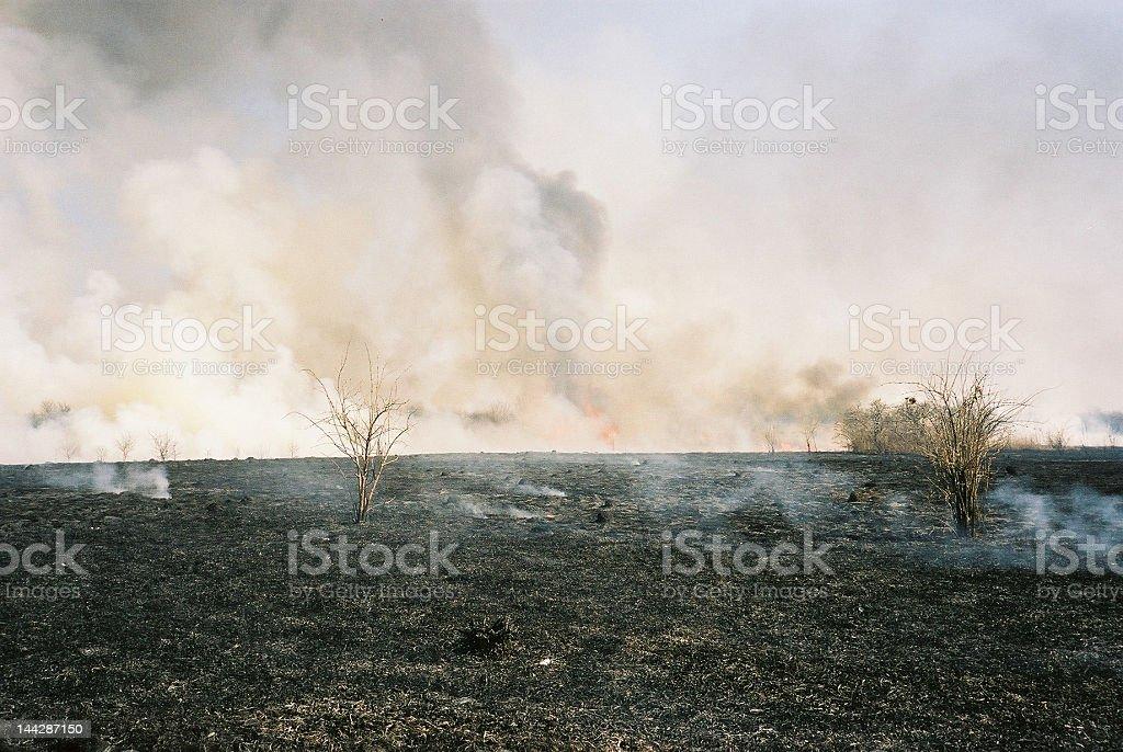 Burned Meadow stock photo