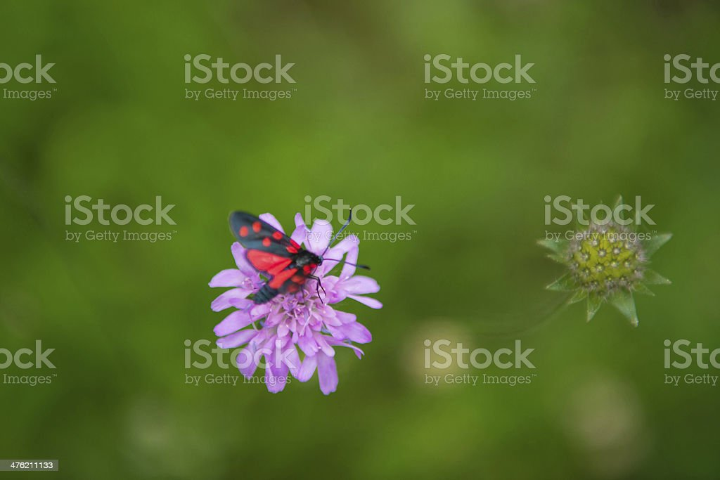 Burnet or blood droplets, royalty-free stock photo
