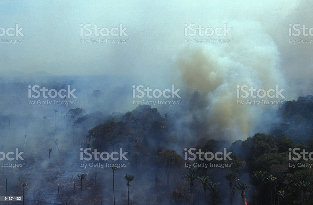 Burning Amazon royalty-free stock photo