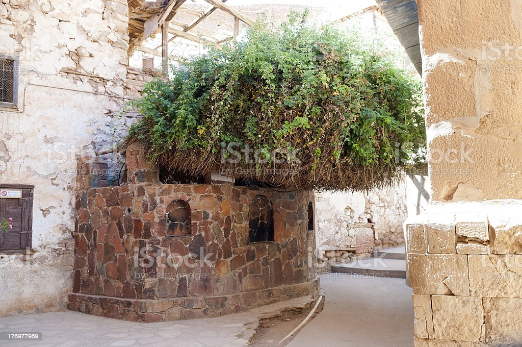 Burning Bush at St. Catherine's Monastery, Sinai, Egypt stock photo