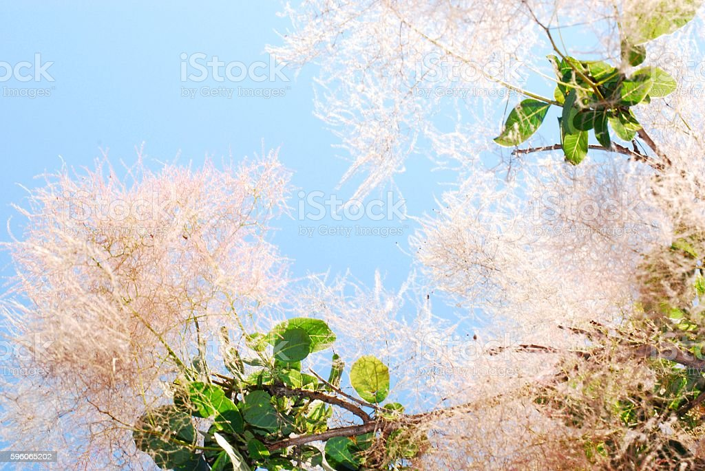 Burning Bush Close Up stock photo