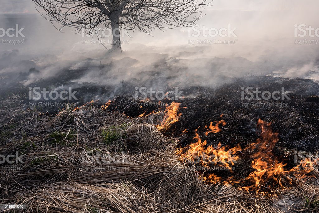 Burning grass and tree. stock photo