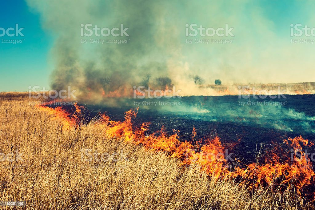 Burning grass stock photo