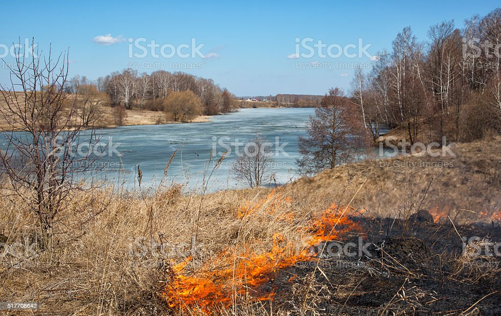 burning last year's dry grass in  spring on  river bank stock photo