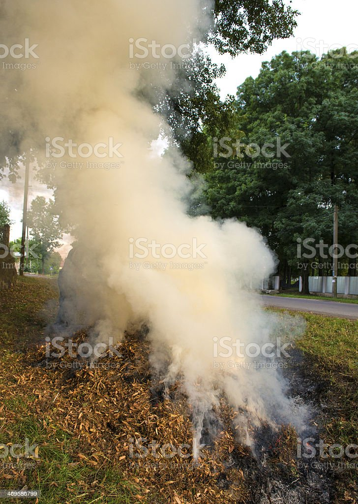 Burning of dry leaves in the park royalty-free stock photo