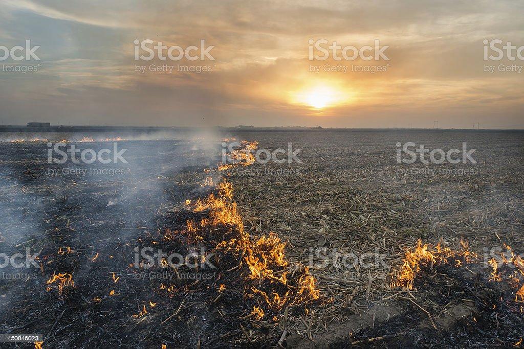 Burning of straw stock photo