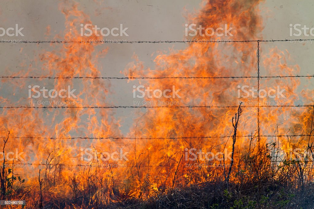 burning prairie grass and barbed wire fence stock photo