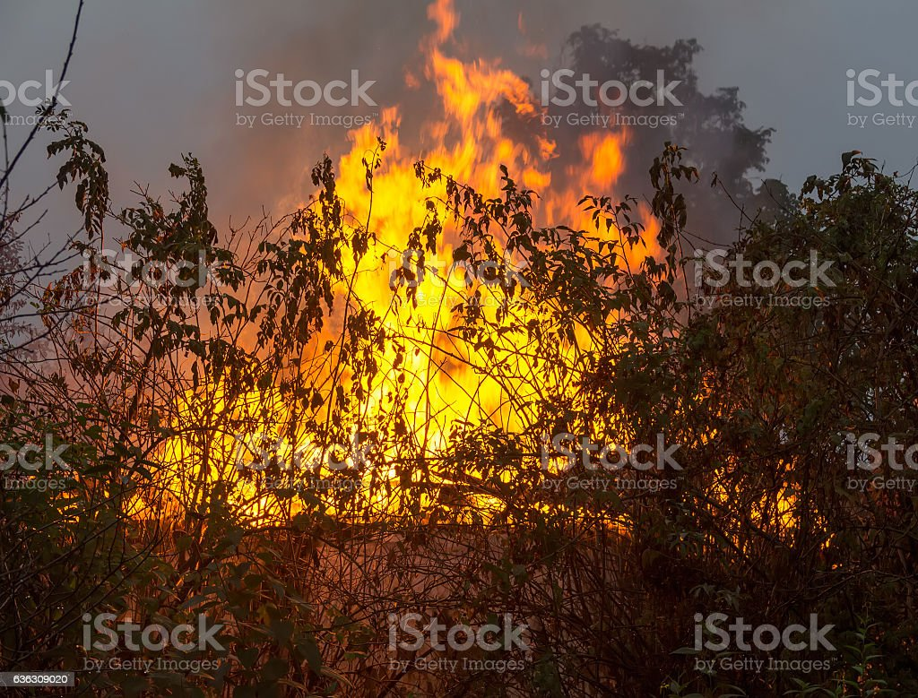 burning rural house in the early morning stock photo