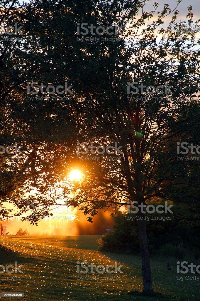 Burning Trees stock photo