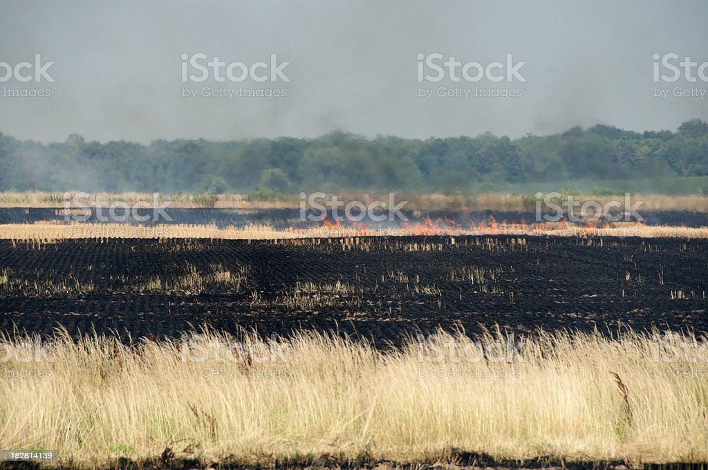 Burning Wheat Fields royalty-free stock photo