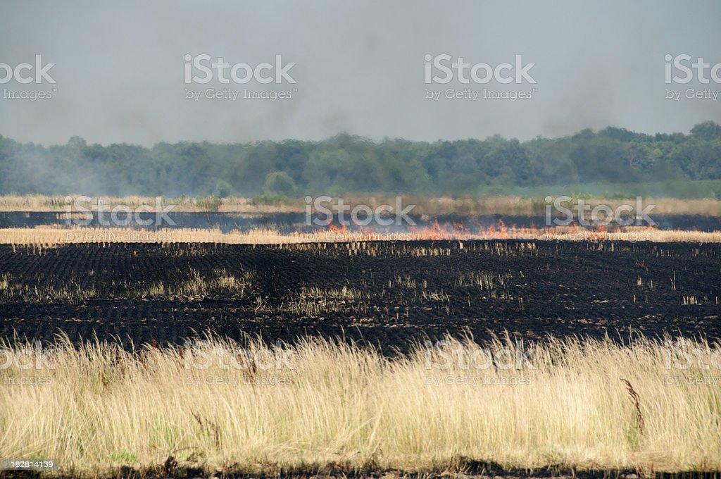 Burning Wheat Fields stock photo