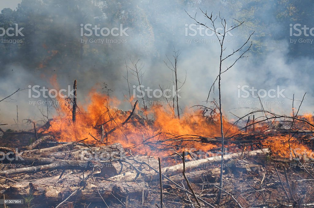 Burning wood pile, from a prescribed fire burn stock photo