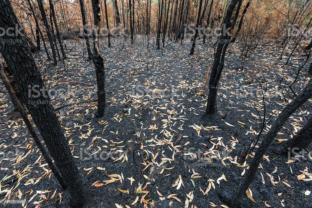 Burnt Australian bush stock photo
